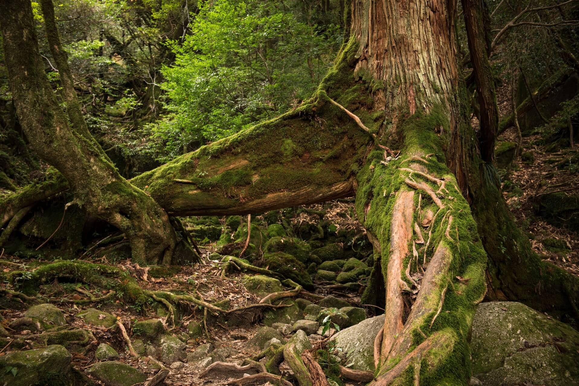 Japan: Yakushima Island, Fotograf: Steffen Lohse