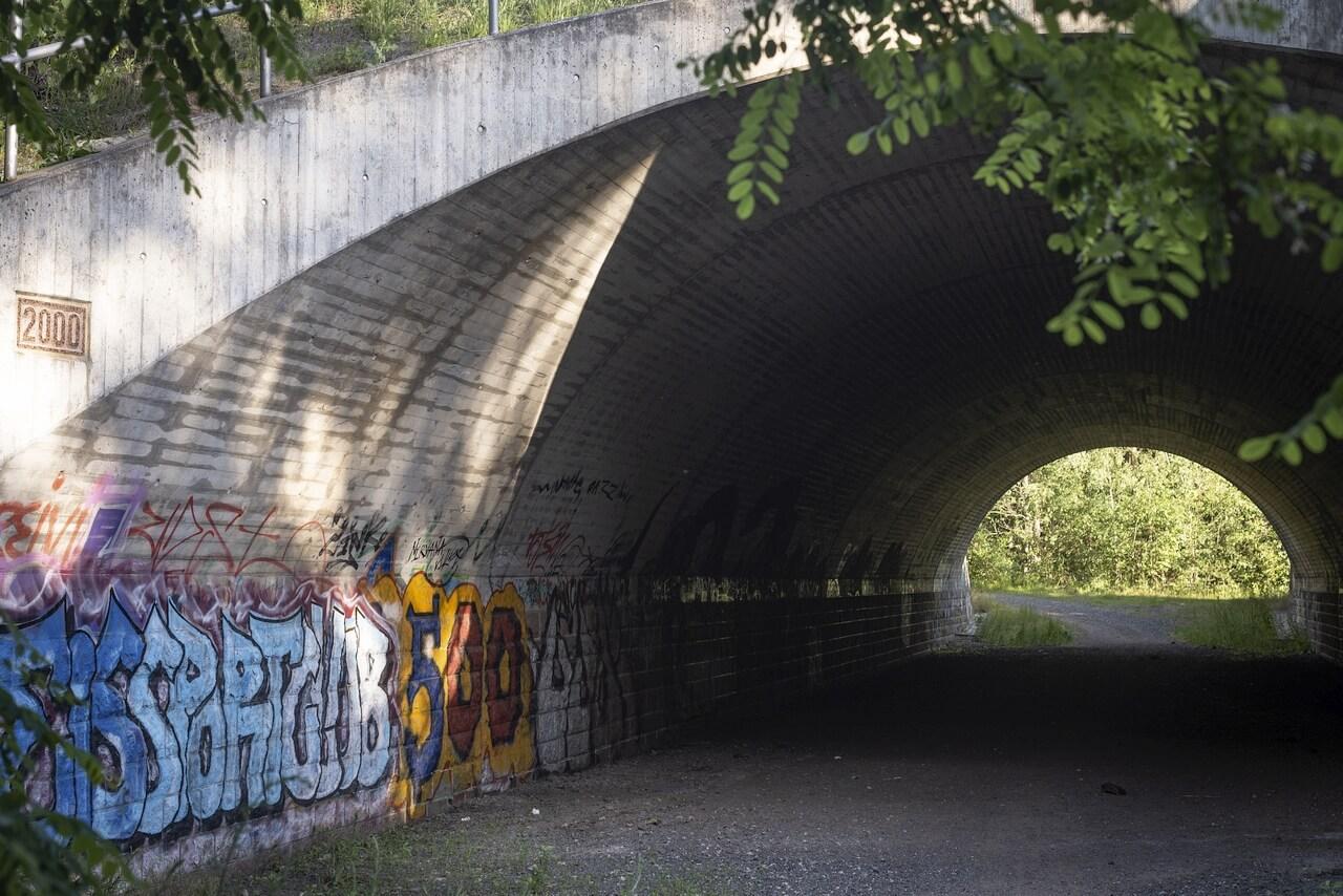 Dresden - Junge Heide